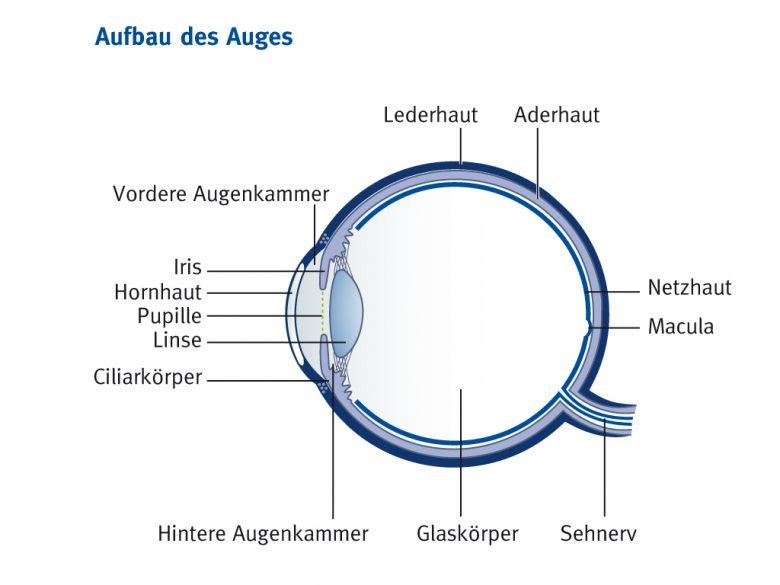 Das Bild zeigt den Aufbau des Auges
